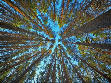 La compensation carbone : une alternative durable à vos émissions de CO2