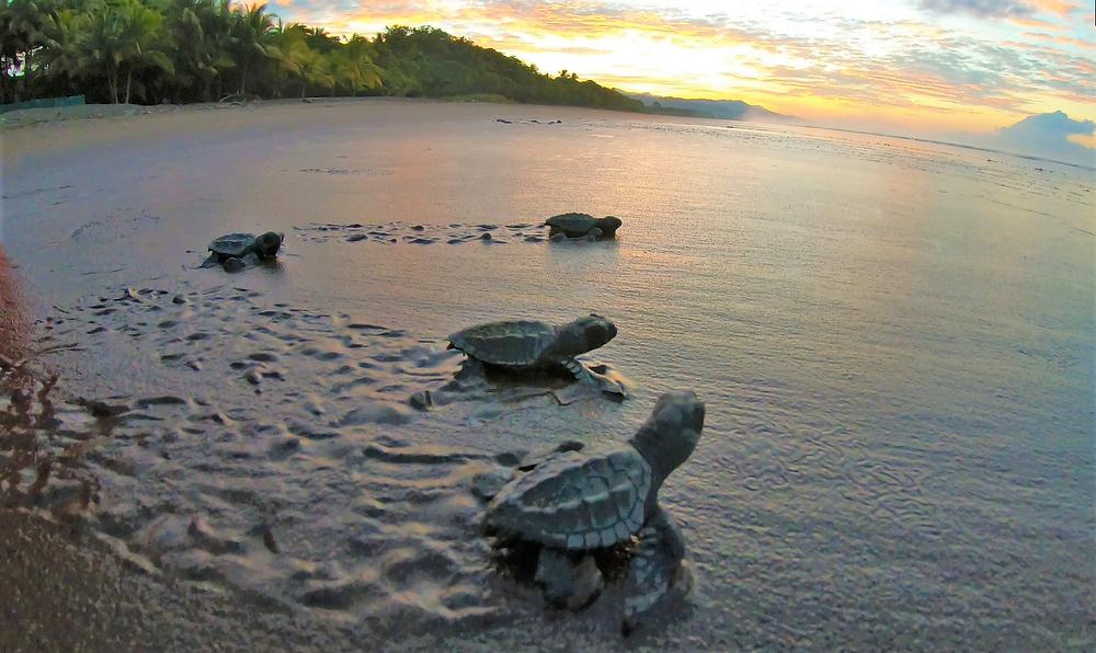 association tortues costa rica