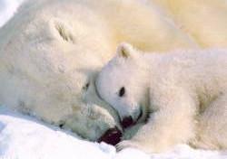 Hibernation ou hivernation ?