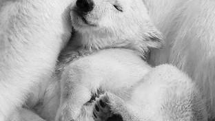 Des jolies photos d'ours pour finir l'année, rien que pour les yeux.