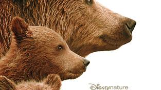 Les ours font leur cinéma