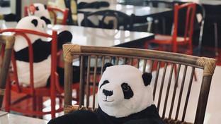 Des ours pour la distanciation sociale