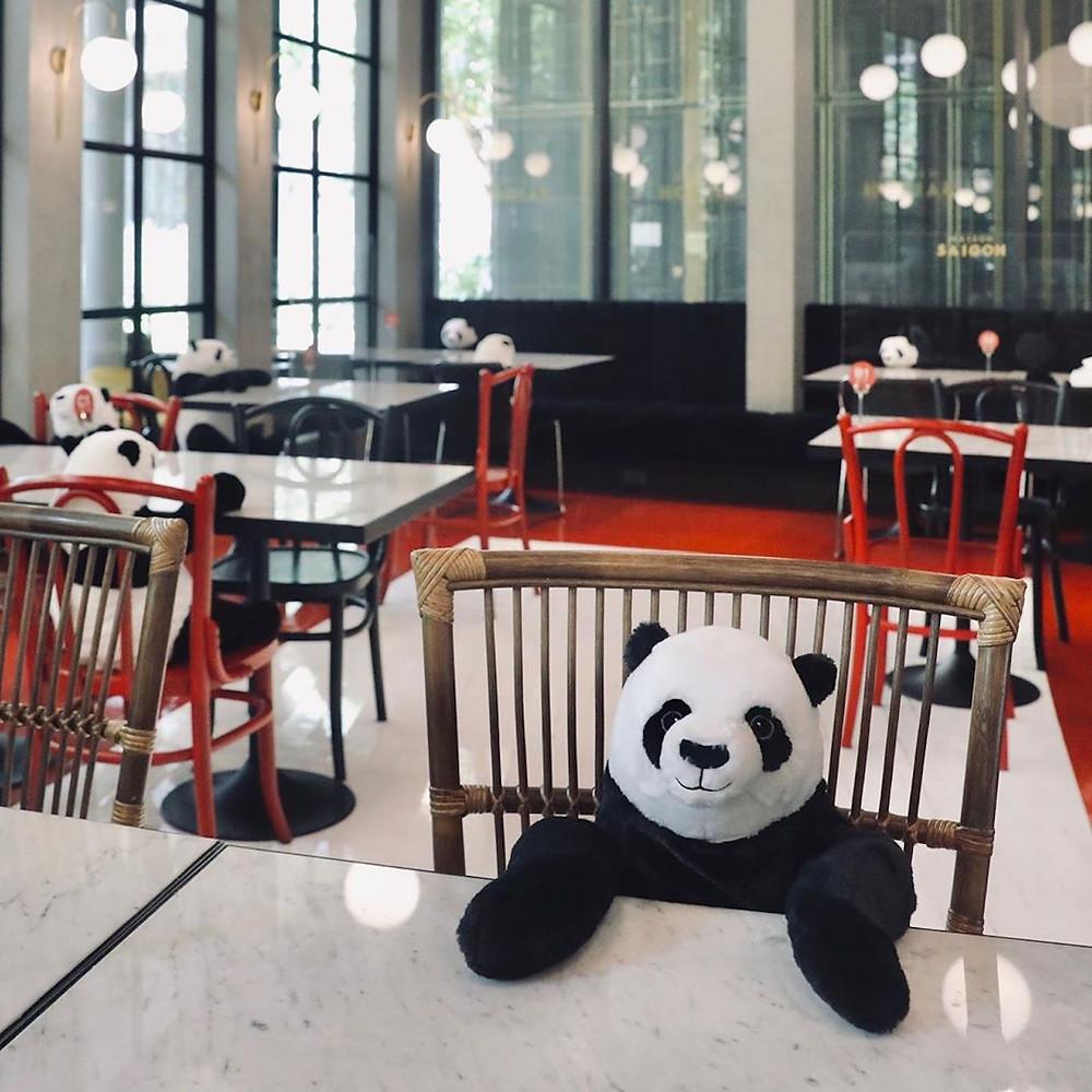 Des peluches panda pour la distanciation