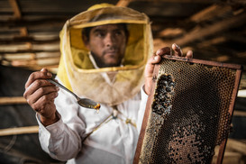 Renova's honey