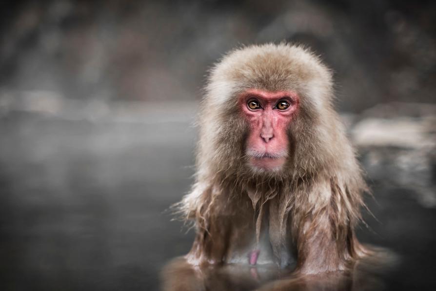 Jacuzzi Monkeys