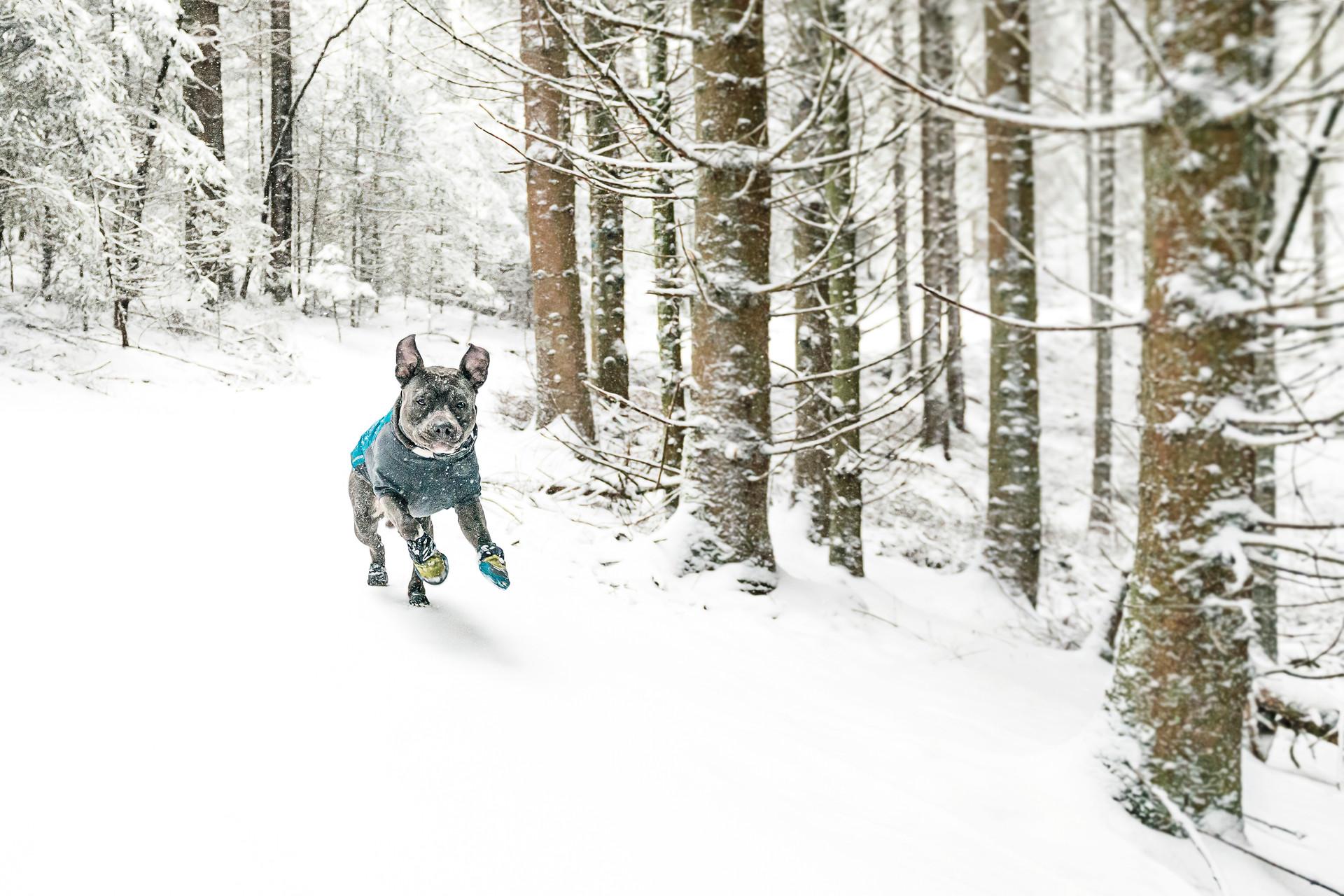 Wohooow-ruff, I likilike that snow boss!