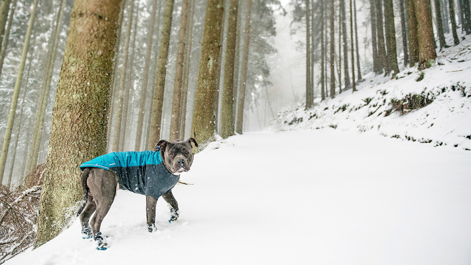Hintobear's first snow...