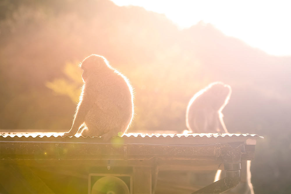 Flare-monkeys - ©BrianDecrop