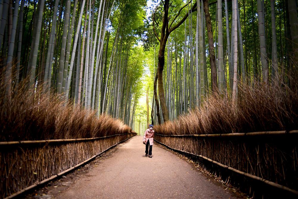 Arashiyama Bamboo forrest - ©Maaike Van den Meersschaut