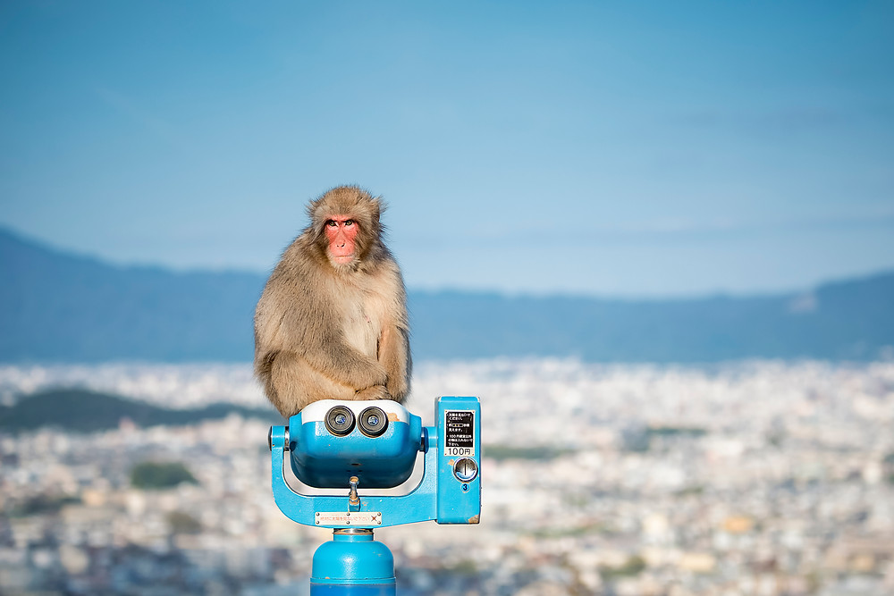 Monkey viewpoint- ©BrianDecrop