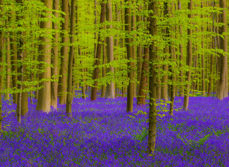 A fairy tale forest...