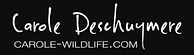 Logo Carole Deschuymere - Wildlife photographer