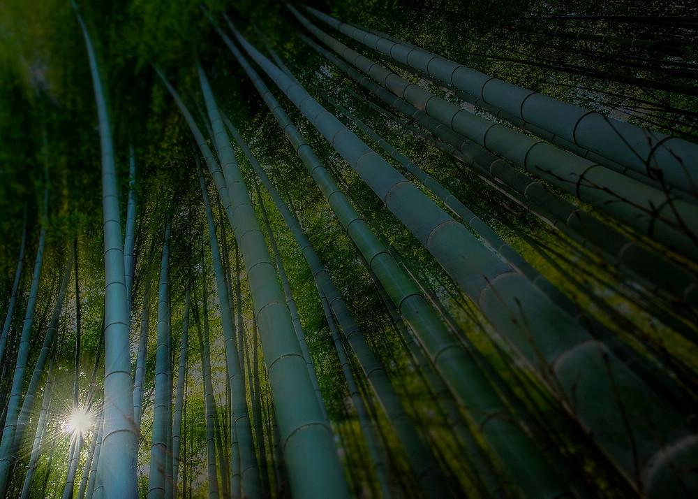 Arashiyama Bamboo forrest - ©BrianDecrop
