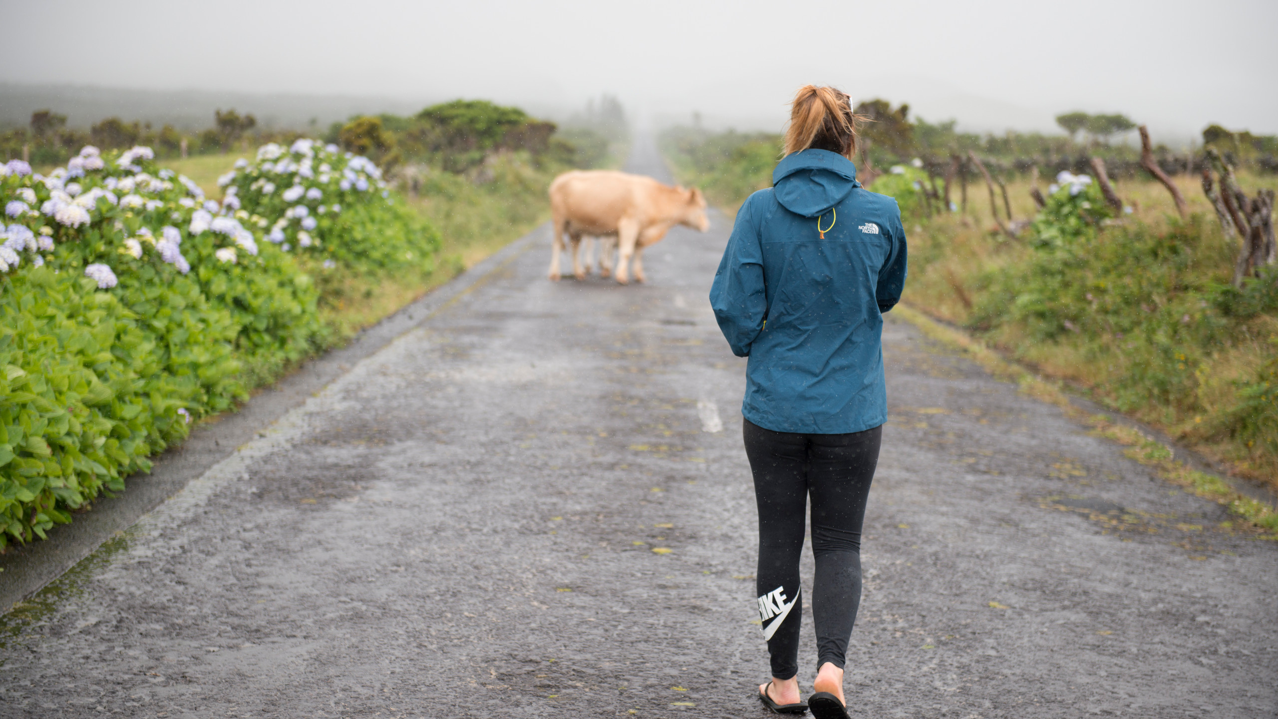 Azores and the cows... 😅
