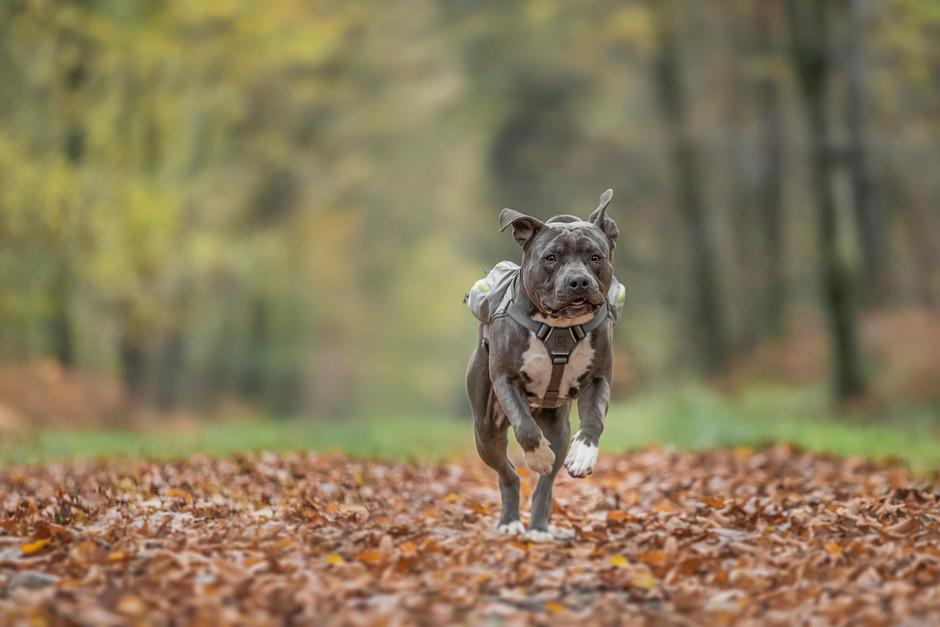 Run Hintobear, Run!