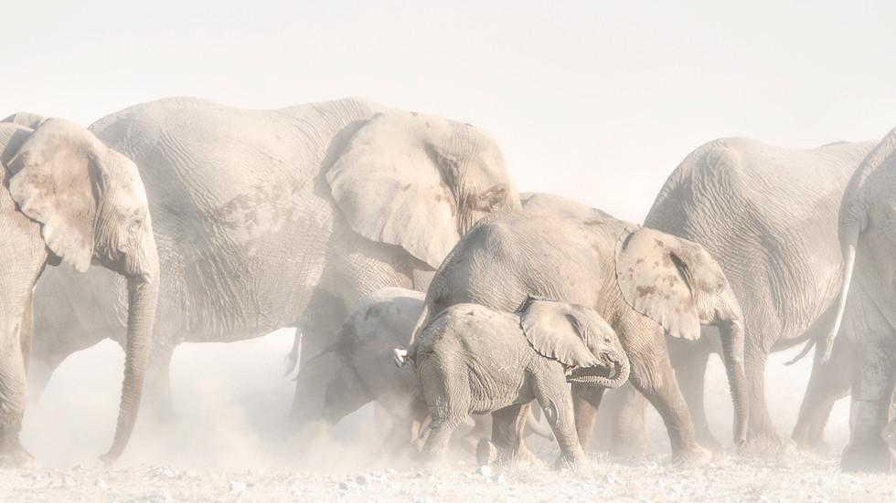 Wildlife in Namibia (Private)
