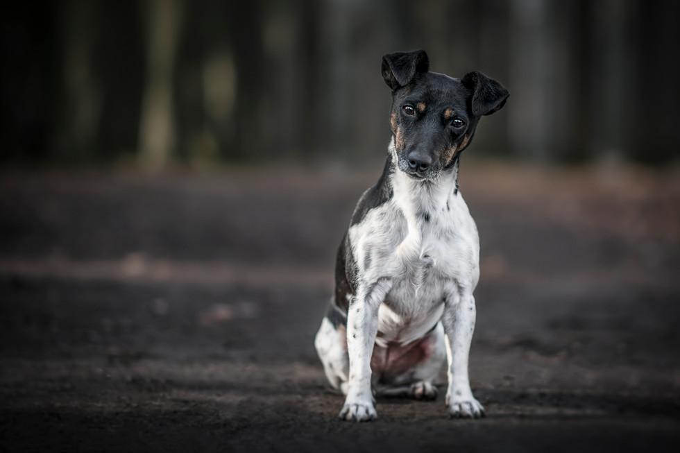 For Hondenschool De Snuffel