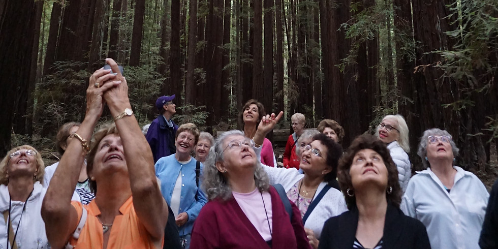 Discover the Redwoods of California: Big Sur to Humboldt County