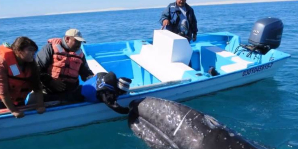 Gray Whales and the Wonders of Baja California