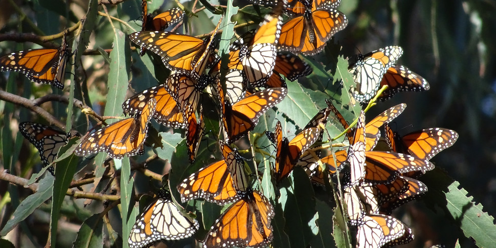Explore the Scenery of Pismo Beach and the Monarch Butterfly Grove