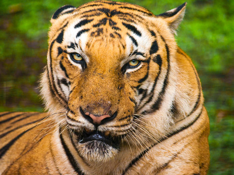 Riding the emerging markets tiger