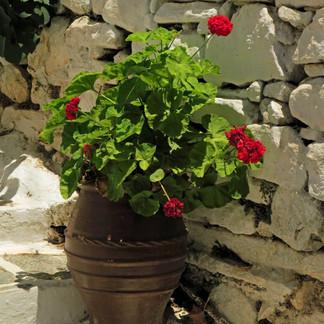 Happy geraniums, Filoti