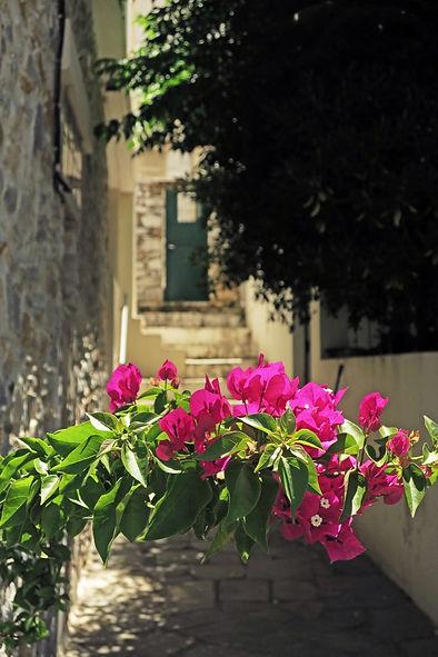 Naxos-Greece-bougainvillea.JPG