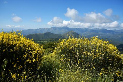 Arcadia-Greece-mountains-and-wildflowers.jpg