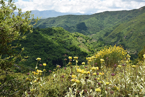 Arcadia-Greece-wilderness.JPG