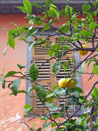 Nafplio-lemon-tree-The-Greekish-Life.jpg