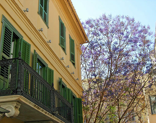 Jacaranda-tree-Plaka-Athens-Greece.JPG