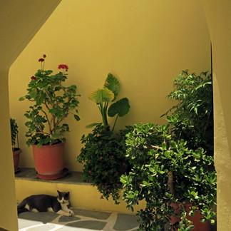 Cat in a courtyard