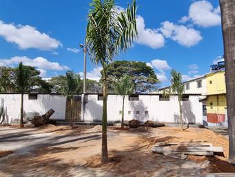 Palmeiras são replantadas no pátio da Paróquia