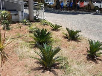 Jardim da Igreja é restaurado por voluntários