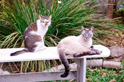Nina & Simba <3