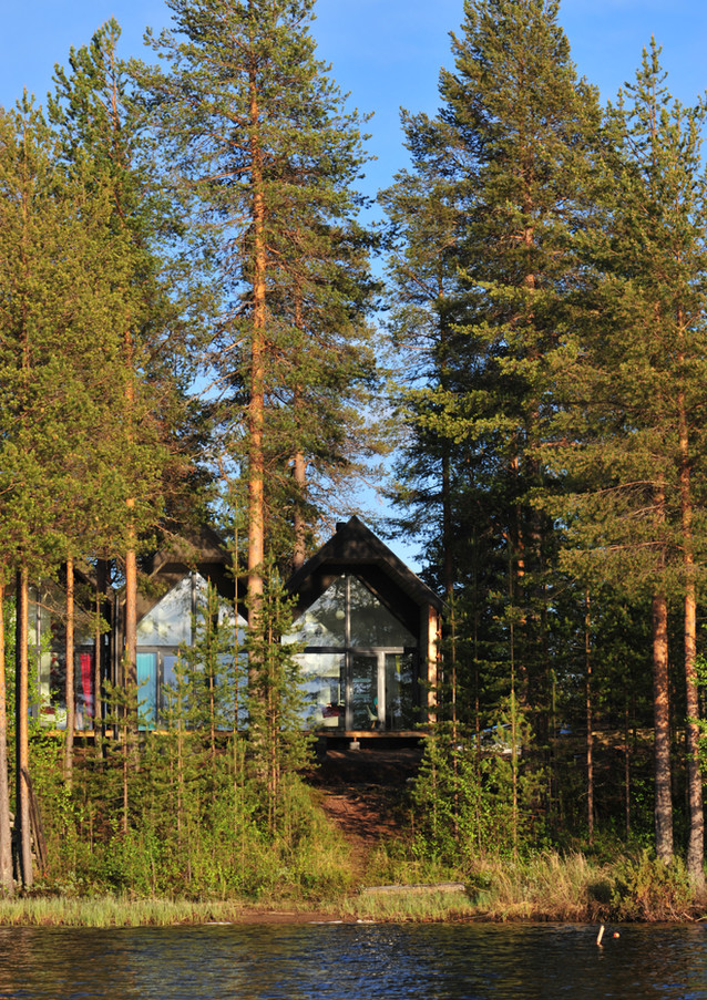 Nids au fond de la forêt