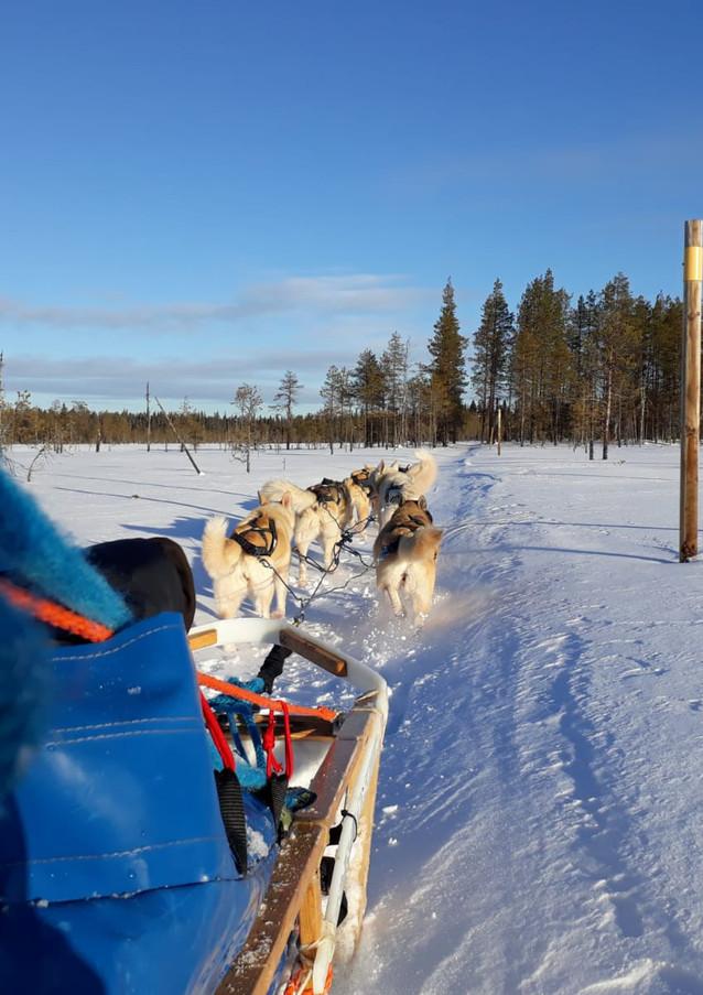 Balade en chiens de traîneau