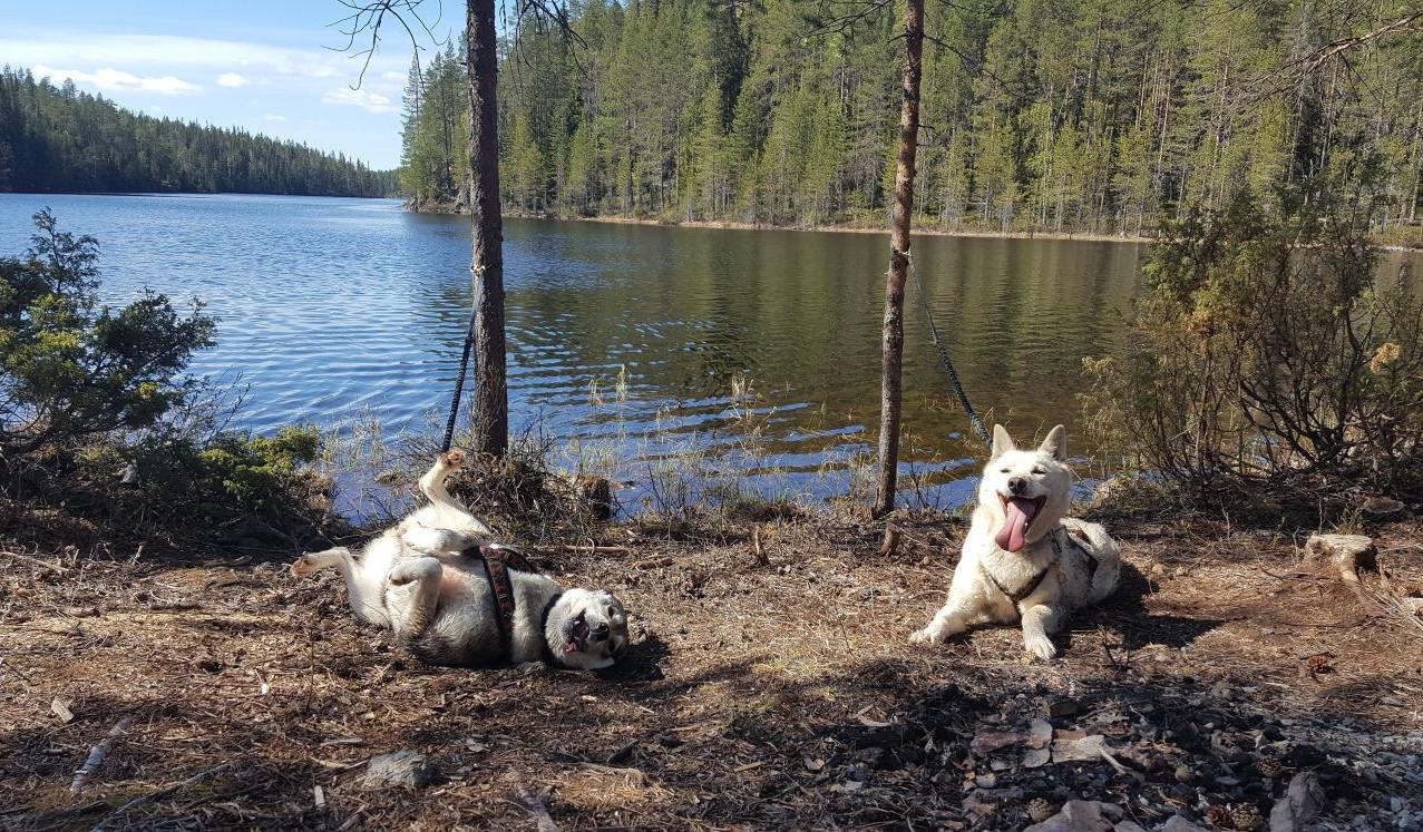 Chien en bord de lac