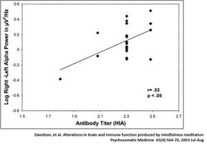Präfrontaler Kortex, Zusammenhang Meditation und Immunsystem