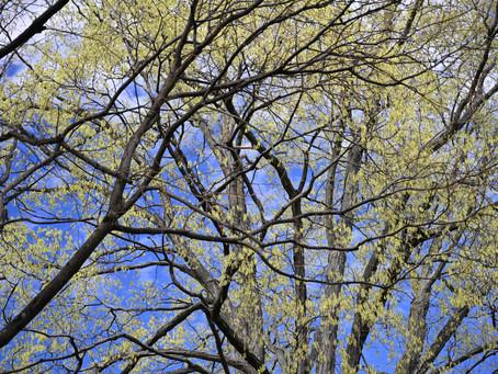 Design and Habitat Hacks: Trees are and Important Part of Suburban Landscape Design