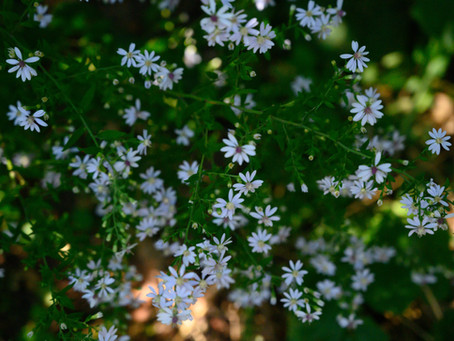 Plant Hacks: Encouraging Wild Native Natives in Garden