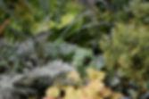 S Shade Border Fern-082207.jpg