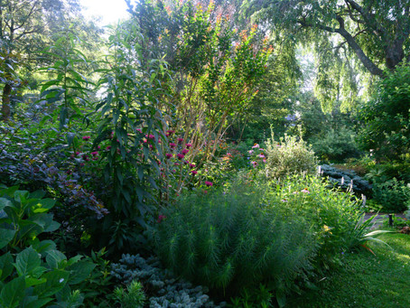 Design & Habitat Hacks: Adding Native Plants to Your Yard is Easier than You Think