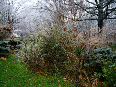 Work Less Hacks: Less Fall Cleanup = Winter Interest