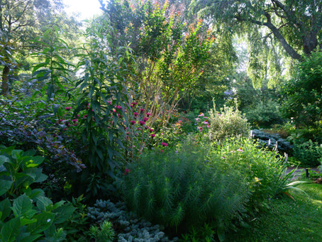 Bring Joy to Your Garden with Natives