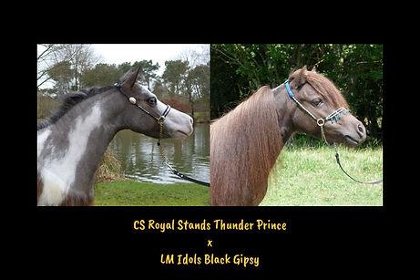 Prince x Gipsy.jpg
