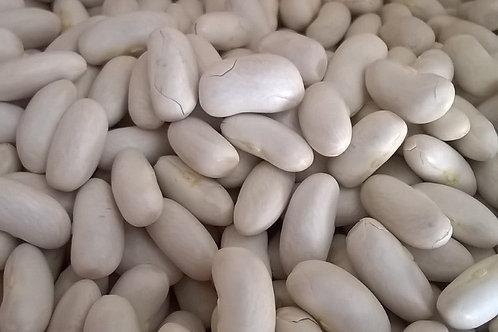 Haricots blancs Bio