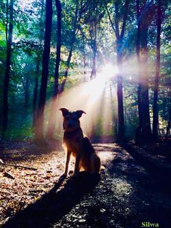 Erleuchteter Praxishund