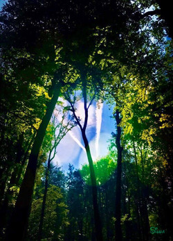 Waldspaziergang in der Pause
