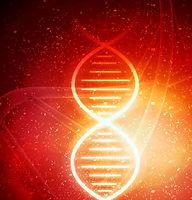 ThetaHealing | Basic DNA | Silwa Naturheilpraxis | Krefeld | NRW